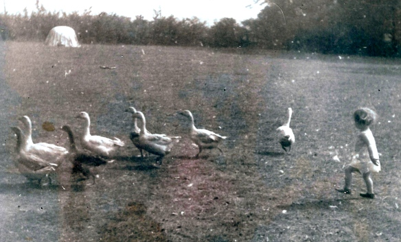 hilary-chasing-geese_2